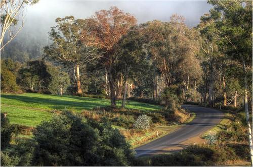 australia tasmania glenfern moogara tasmanianscenery tasmaniancountryside trees countryside scene pretty colour mist fog road lane view canoneos550d ef35350mm13556lusm derwentvalley trainsintasmania stevebromley