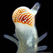 A fan worm radiolar eye