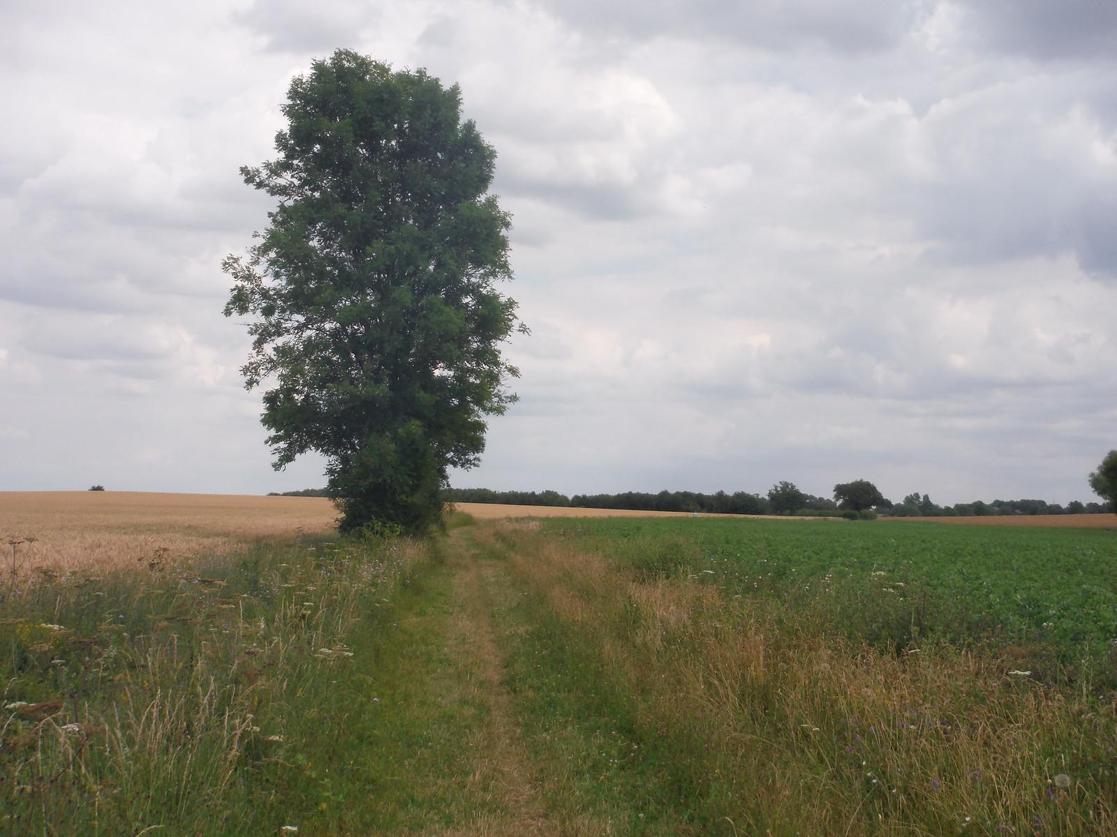Grassy Field Boundary, towards Pirton SWC Walk 233 - Arlesey to Letchworth Garden City