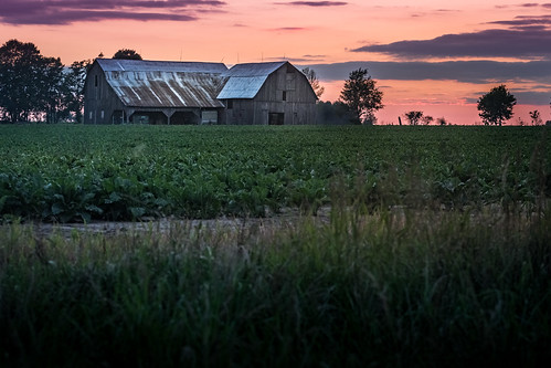 canoneos5dmarkiv canon 5d beet beat farm sugarbeets camp granjero barn old sunset atardecer evening july verano summer peaceful growing crop mi michigan midland