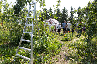 Green & Gold Community Garden Orchard Tour | by mastermaq