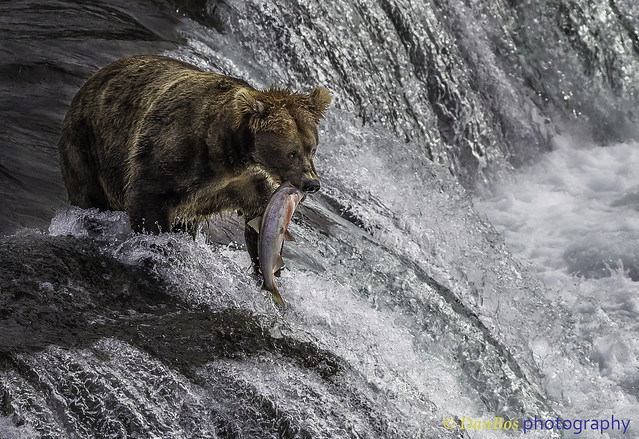 "Bear: ""Finally I got it!!!"""