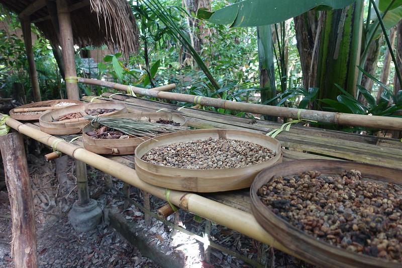 Luwak - kopi luwak - Bali