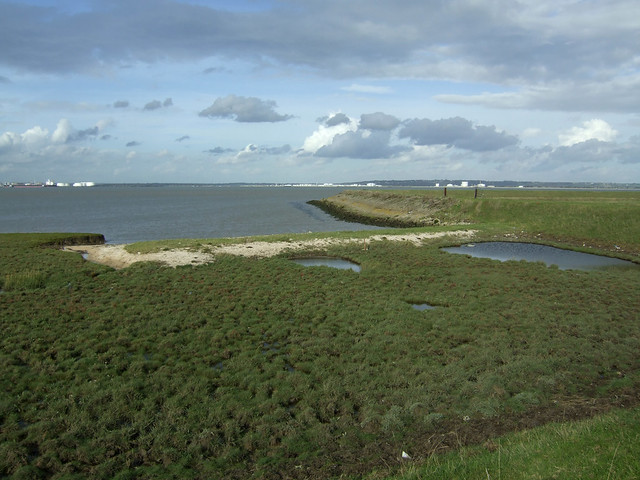 Egypt Bay, Halstow Marshes