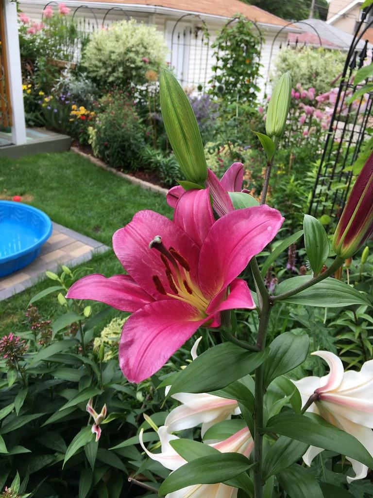 Backyard Flower Gardens | Kim Beckmann | Flickr