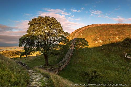 early england fields hadrianswall morning northumberland robinhoodtree romanwall shadows sill sky steelrigg sun sunrise sycamore sycamoregap