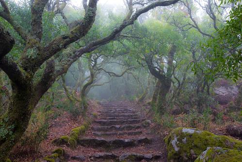 forest bussaco buçaco trees mist fog landscape green path summer leafs mata