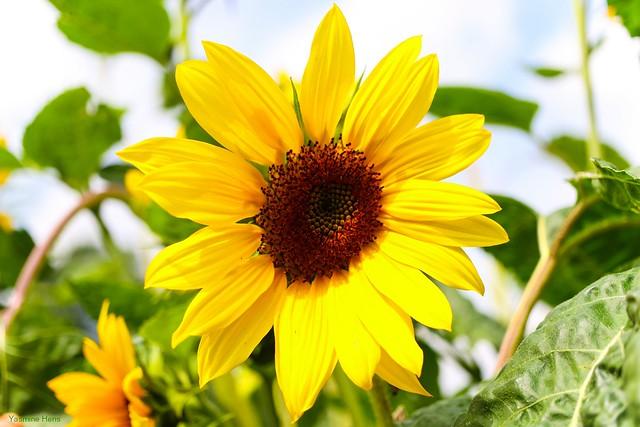 O sole mio