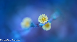 blue light garden | by frederic.gombert