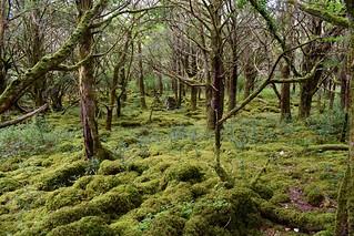 Killarney National Park   by tijsopreis