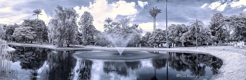 infraredview infrared infrarrojo botanicgarden garden jardinbotanicobogota ir jardin nikon nikonflickraward luisfrancor