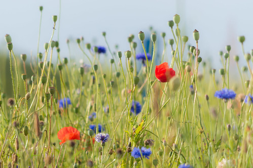 Wild flowers by the beach | by Ted Rabbitts