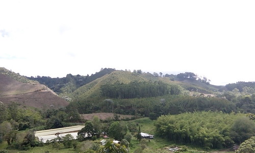 survivetravel travel theocasocoffeetour salento quindio colombia viewfromfinca