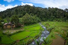 Mount Halimun Salak National Park