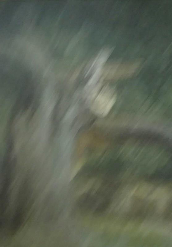 Little flower in the rain (Abstrait)