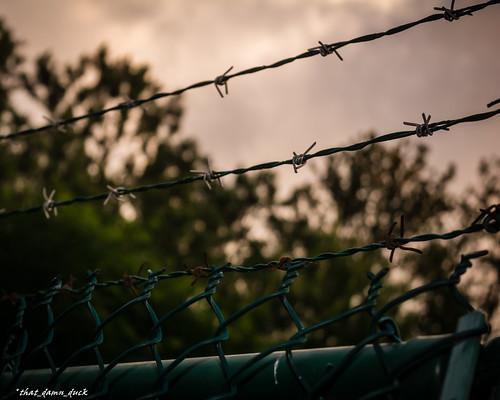 barbedwire fence fencing dawn sunrise