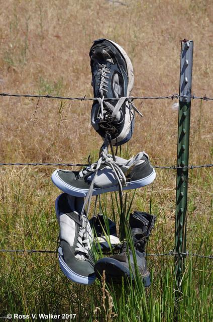 Shoe Tree Rejects