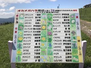伊吹山 表登山道 オカメガハラ周辺に咲く70余種のうち主な草花   by ichitakabridge