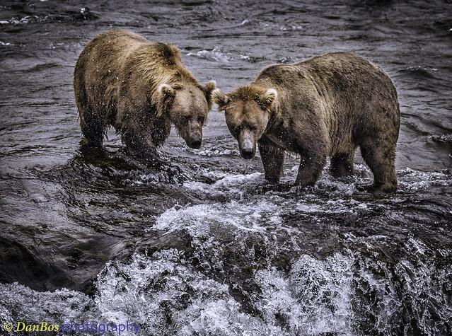 Bears waiting for gift