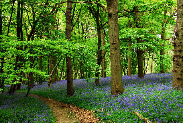 Orlestone Forest