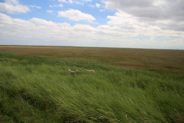 The Humber near Skeffling