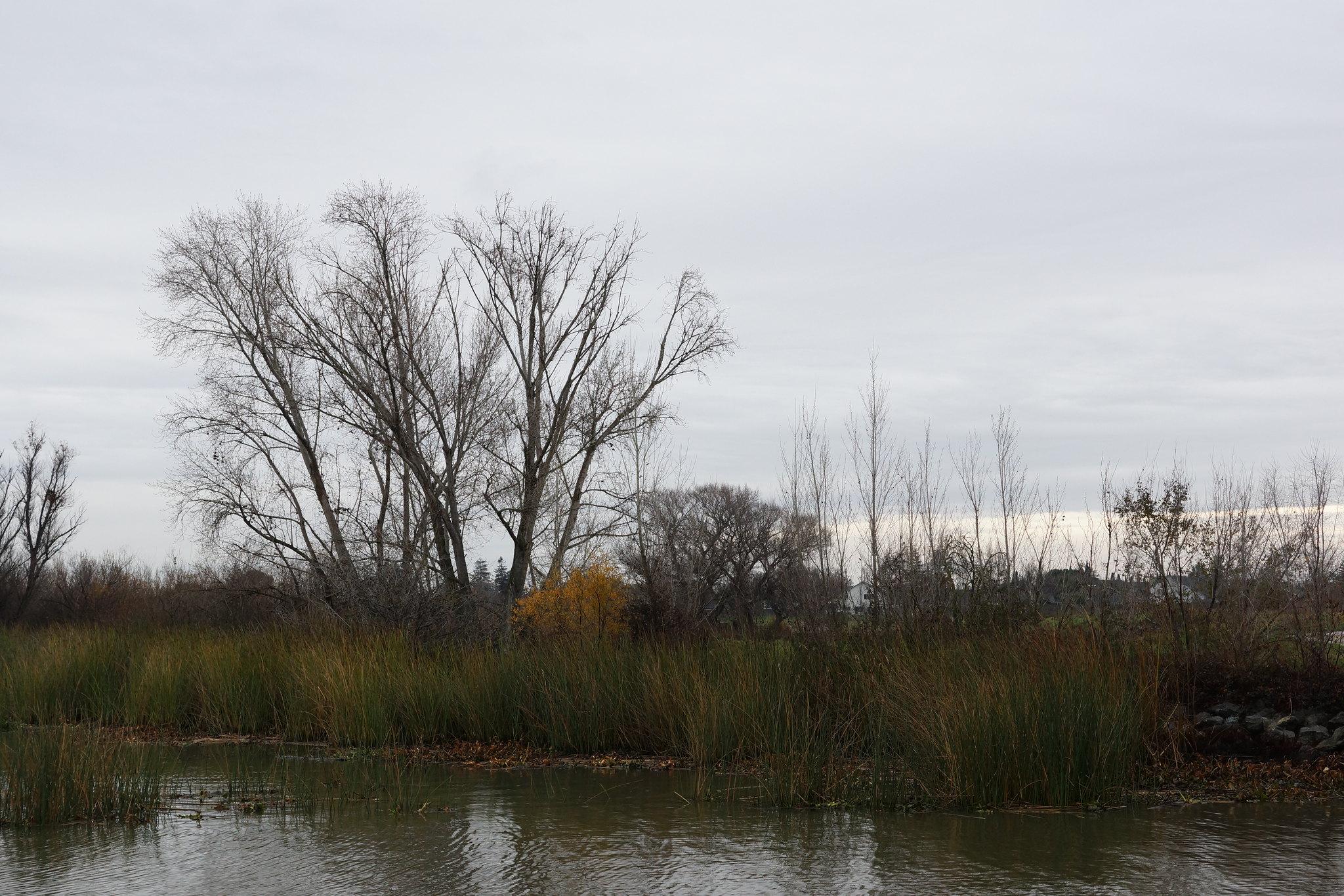 2017-01-03 Big Break Shoreline's Watershed (#4)