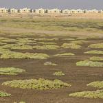 Doha Mangroves