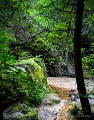 Exploring Dismals Canyon in Haleyville, AL