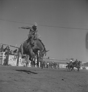 A cowboy rides a bucking bronco, Calgary Stampede, Alberta / Cowboy monté sur un bronco fougueux, Stampede de Calgary (Alberta)
