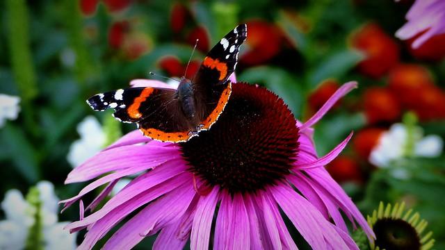 Czas na motyle.