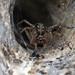 2017 07 29_Labyrith Spider-1.jpg
