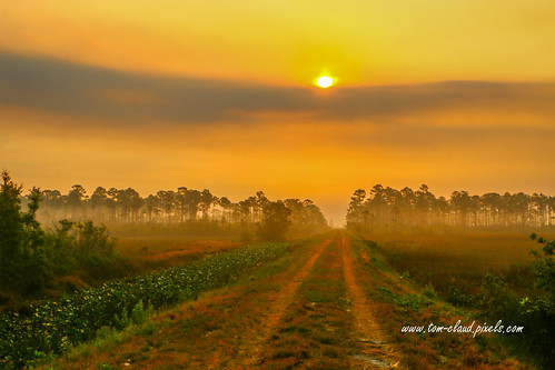 road canal rural dirtroad gold goldenlight morning sunrise landscape joneshungryland joneshungrylandwildlifeandenvironmentalarea nature mothernature martincounty florida usa