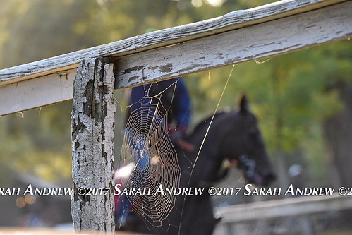 Spider Horse | by Rock and Racehorses