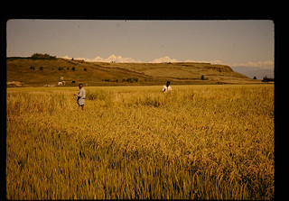 KHUMALTARの農場にて