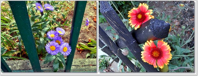 Virágok az utamon-Flowers on my road
