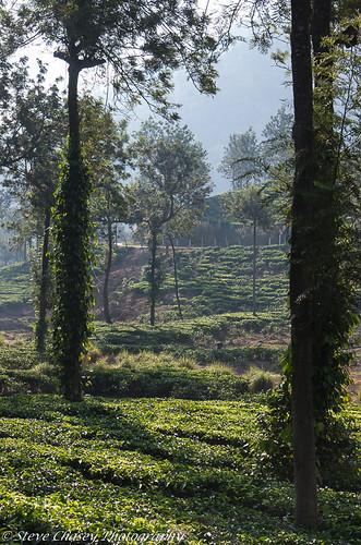 kerala pentaxk5mkiis southindia vandiperiyar roadviews smcpentaxda50135mm teaplantation