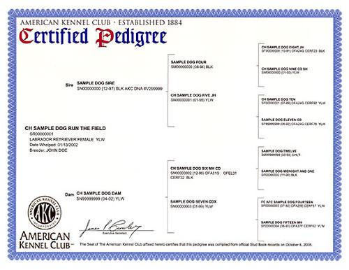AKC certified pedigree | by RBElwell