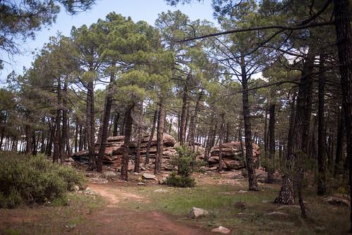 Pinares de Rodeno, Sierra de Albarracín, Teruel   by Sitoo