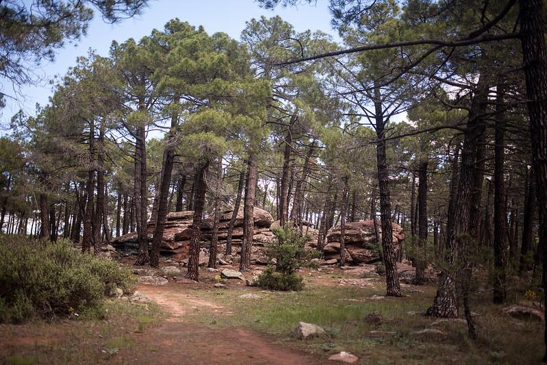 Pinares de Rodeno, Sierra de Albarracín, Teruel