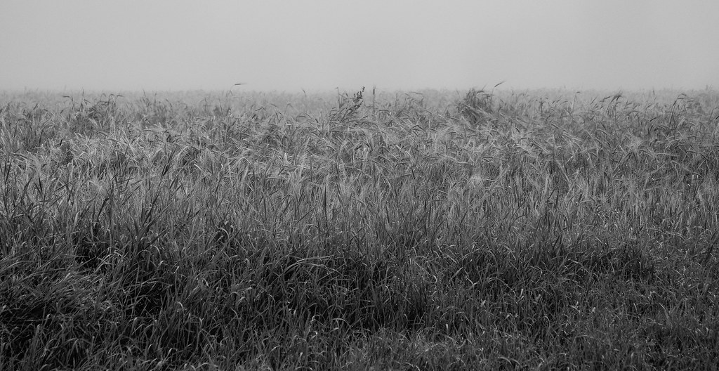 Foggy Day at Creamers Field Shared BW-3