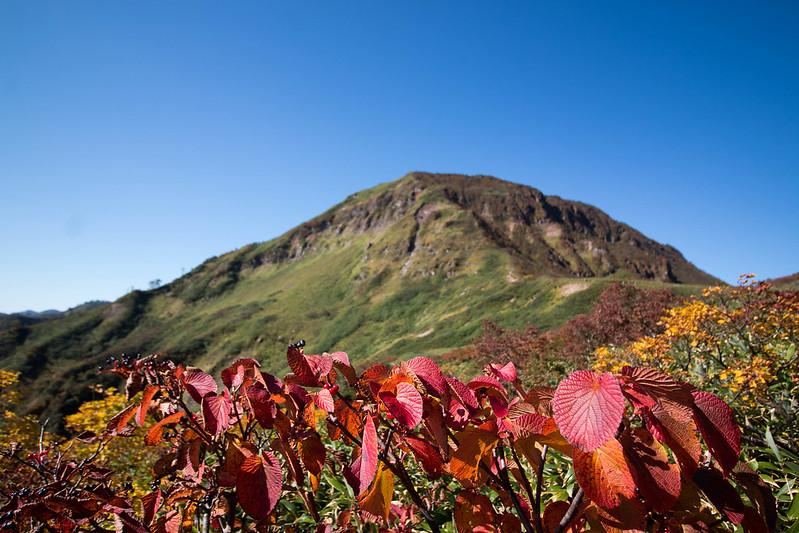 苗場山と紅葉の葉