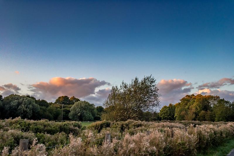 Hambrook Marshes, Canterbury