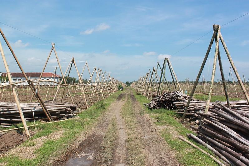 Ready for Plantation