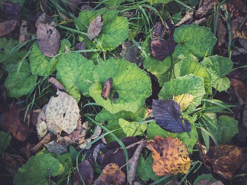 fall-6 | by trevorrichardsmusic