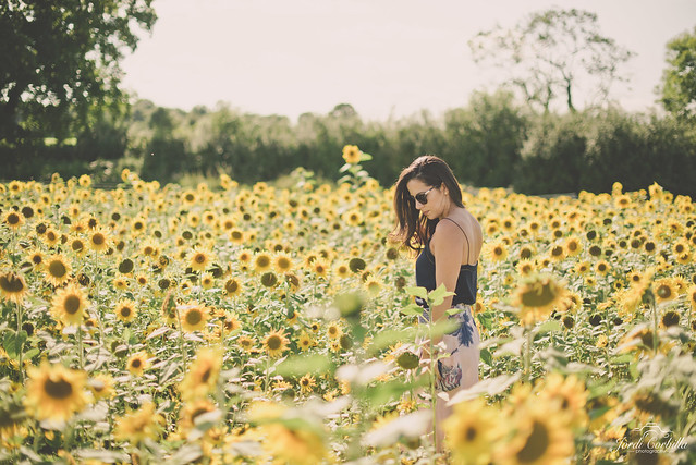 Surrounded by the sunflowers.