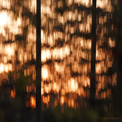icm intentionalcameramovement impressionisticphotography photographicimpressionism sunrise