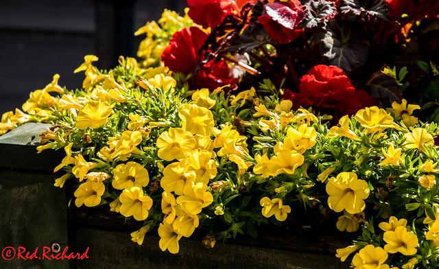 Flower box Berwick upon Tweed (232)