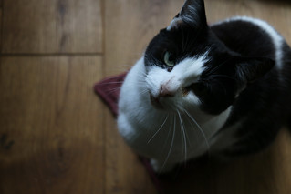 Cat | by English Girl at Home