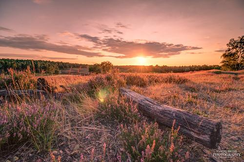 Sonnenuntergang in der Fischbeker Heide | by diablopb