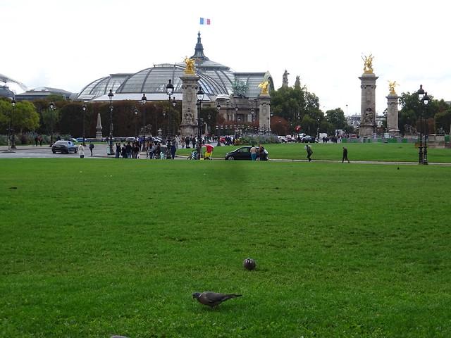 Gros pigeons avec le grand palais et le pont Alexandre III